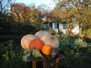 Freie Gartenakademie